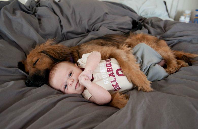 Mascotas enamoradas