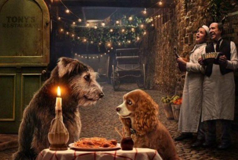 Lady And The Tramp: nueva estrella de Disney fue rescatado en un refugio