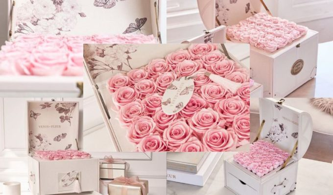 Venus ET presenta dos hermosas opciones para regalar rosas en San Valentín