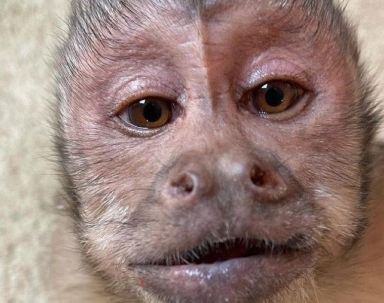 George el mono